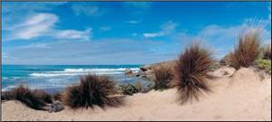 Cape Jaffa Coastline